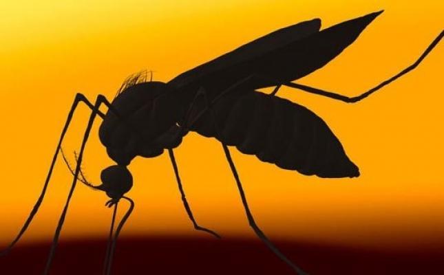 Şehri İstila Eden Sivrisinekler Mecliste!