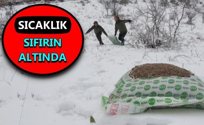 Kocaeli'de karla kaplı ormanlara yaban hayvanları için yem bırakıldı